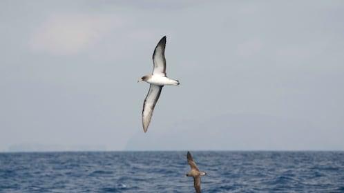 Bird watching tour in Madeira