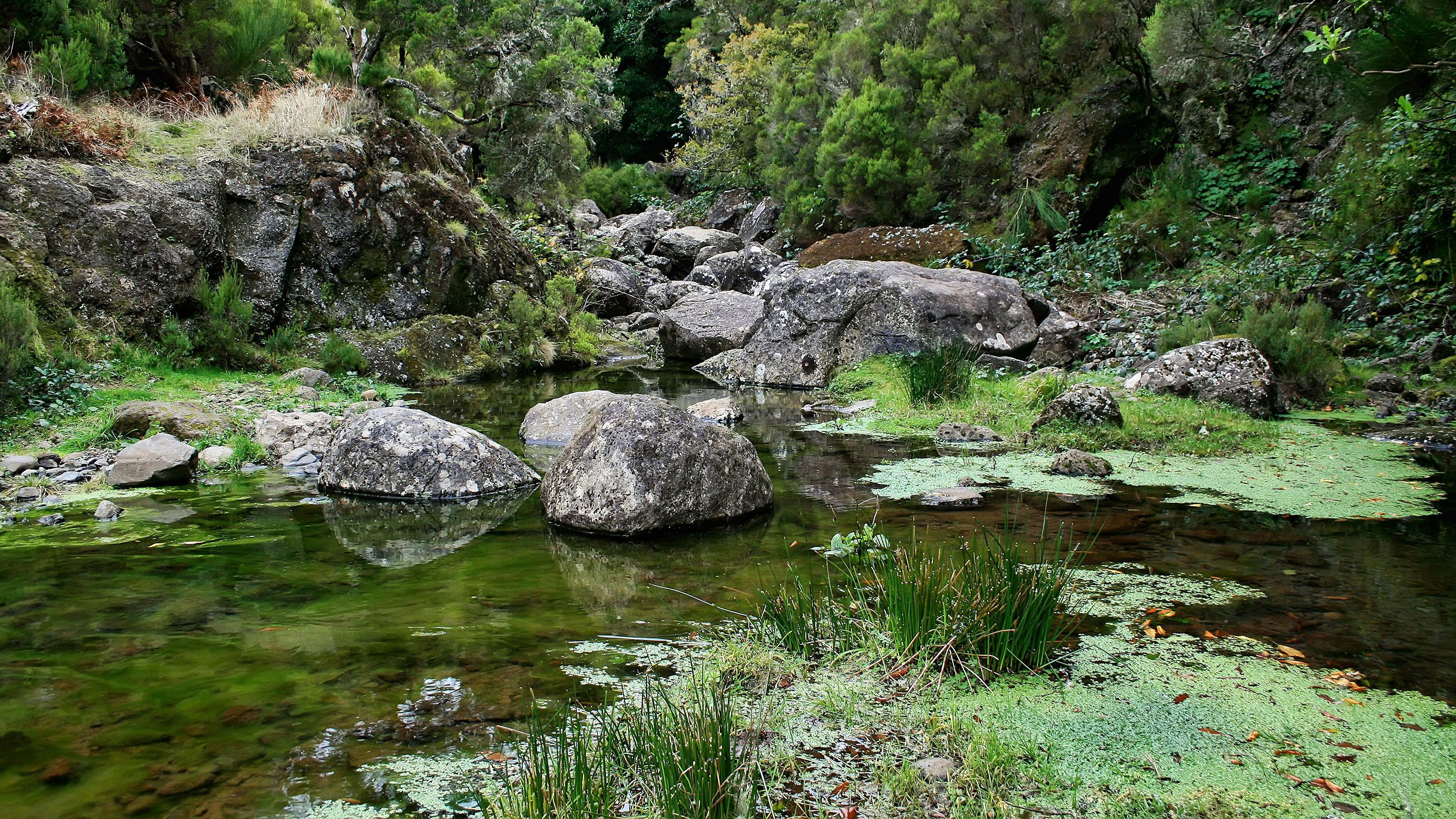 A placid river in Madeira