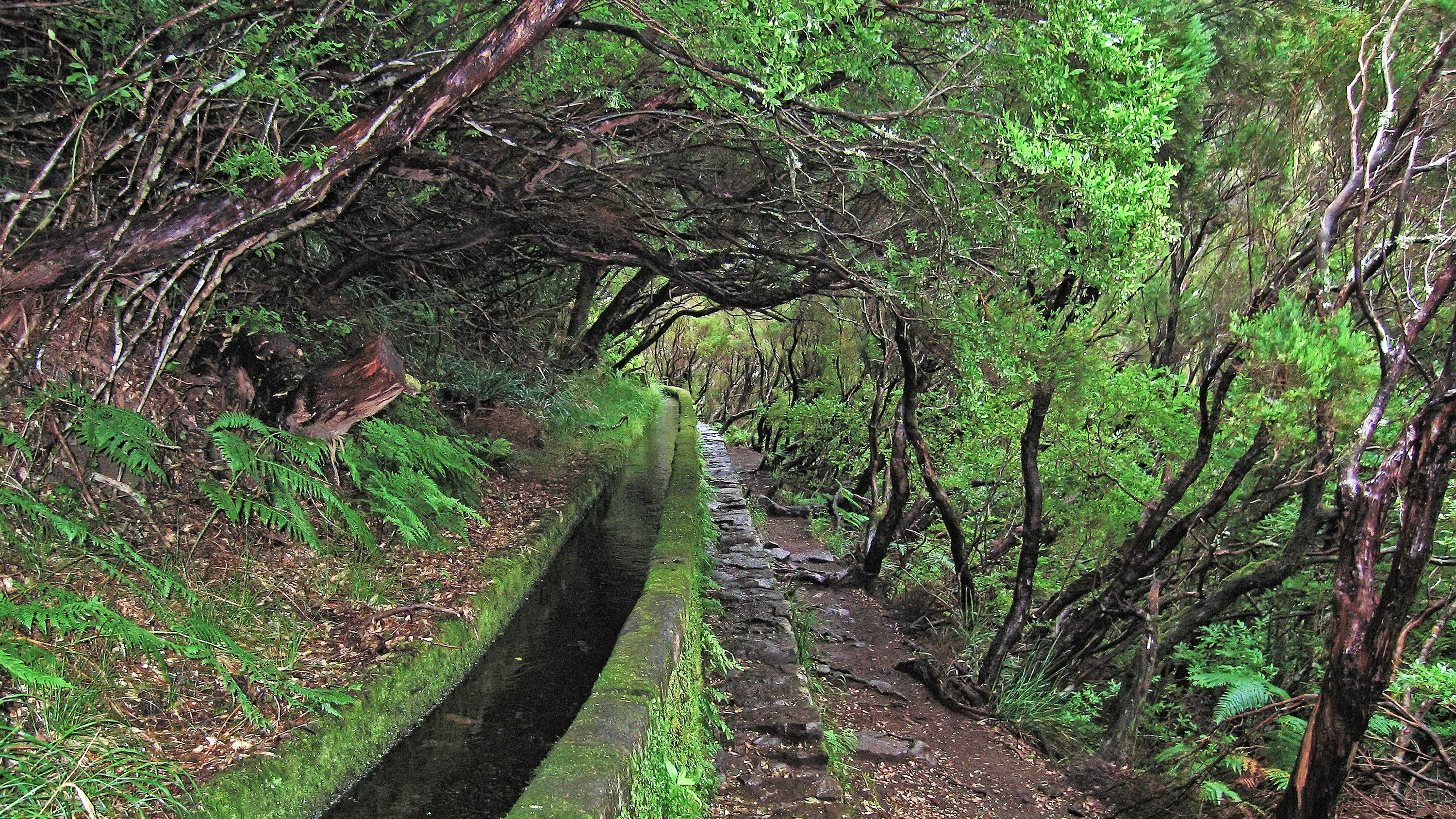 A levada in Madeira