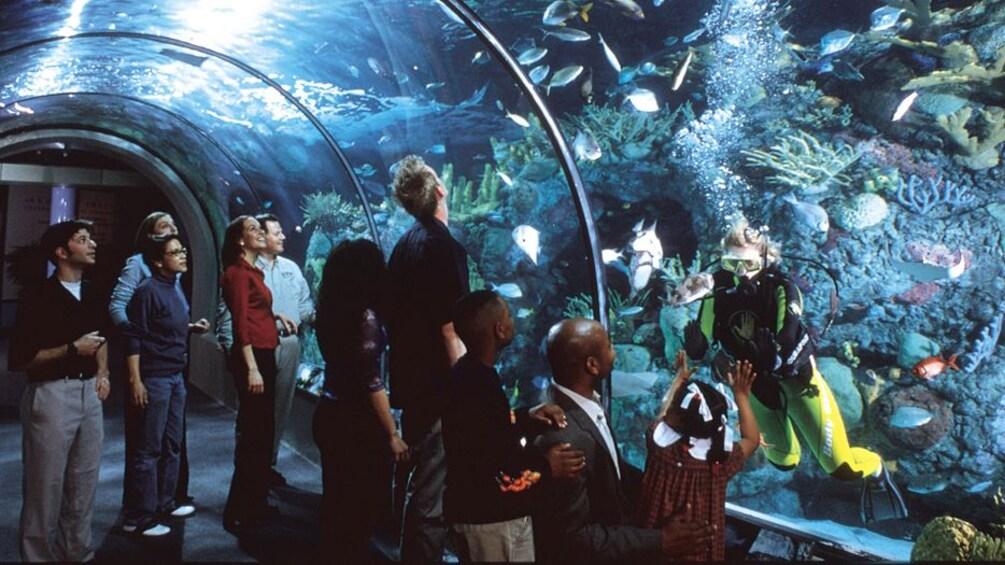 Show item 3 of 5. tourists watching scuba diver in ocean habitat in Audubon Aquarium in New Orleans