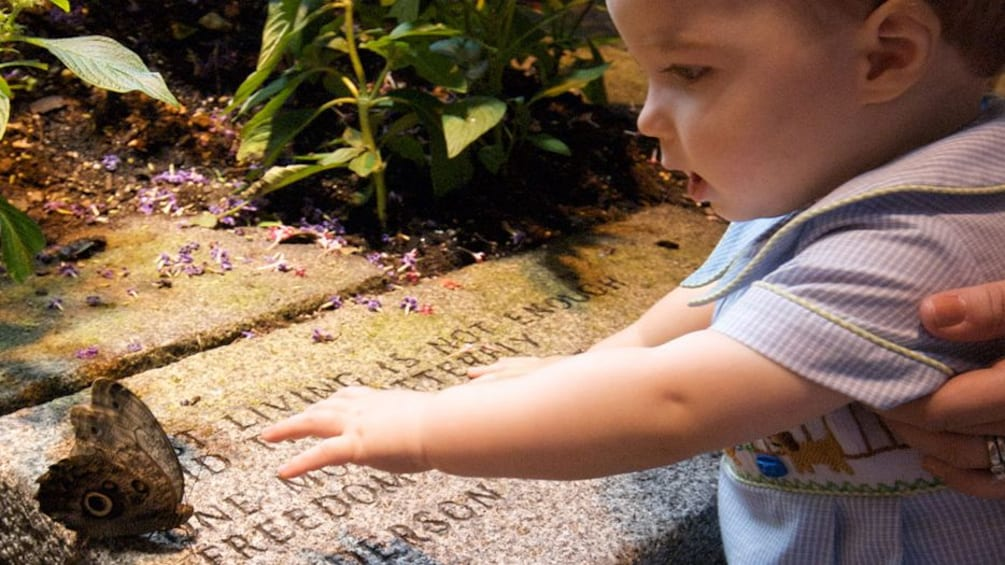 Show item 2 of 6. young boy reaching for butterfly at Audubon Butterfly Garden in New Orleans