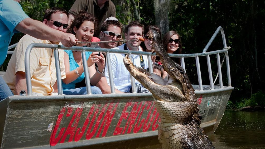 Show item 8 of 8. alligator leaping out of water near boat in New Orleans