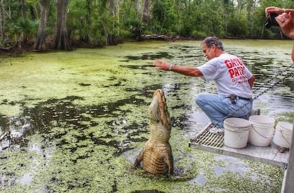 Cajun Pride gator feeding_crop.jpg