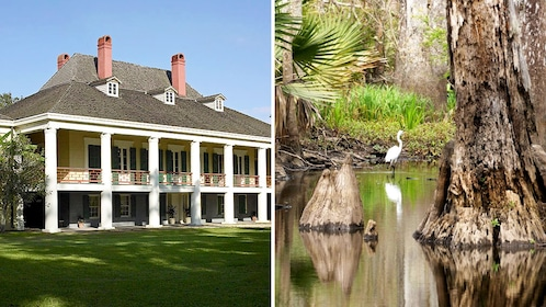 Combo image of Plantation and swamp tour in New Orleans