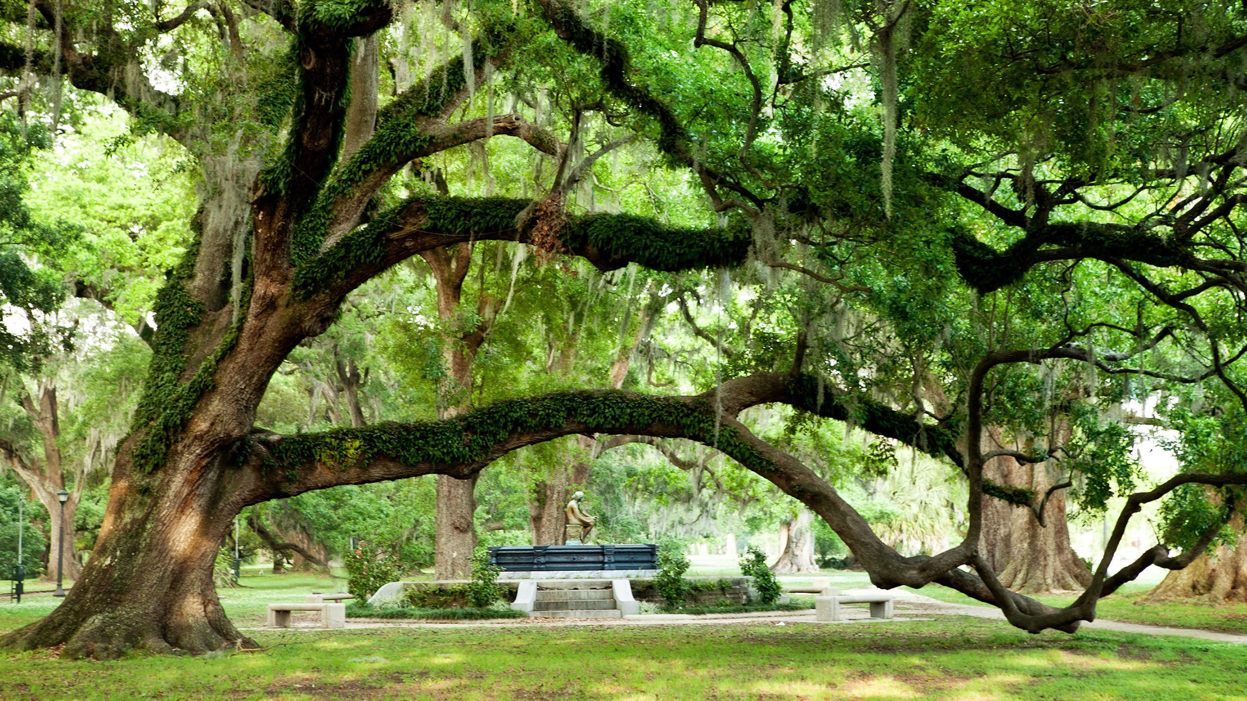 large tree with huge branches at park in New Orleans