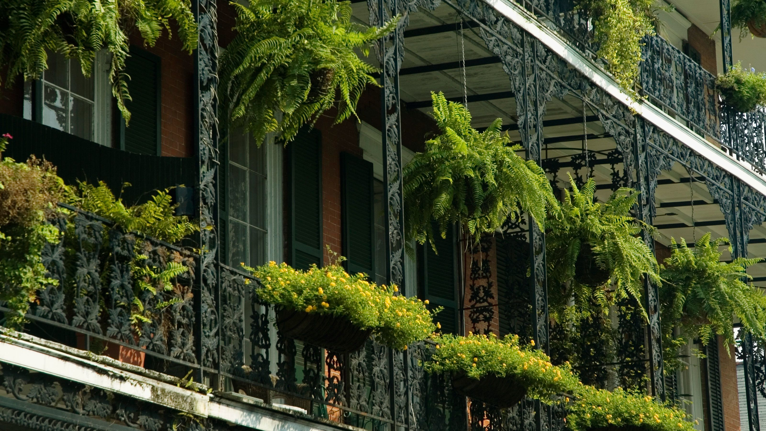 Close up building views on the French Quarter Walking Tour