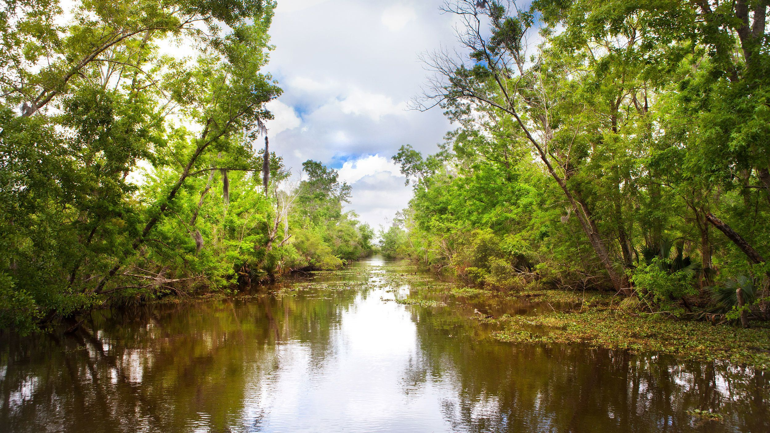 swamp bayou in New Orleans