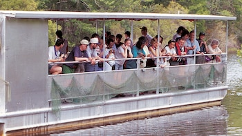 Jean Lafitte Swamp & Bayou Boat Tour from New Orleans