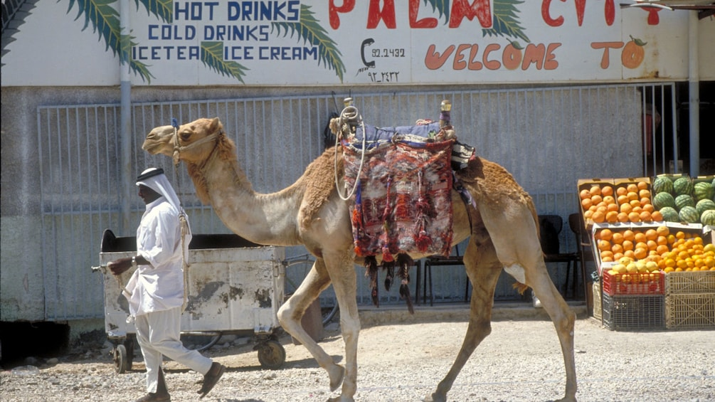Show item 2 of 5. A man leading a camel down a street in Bethlehm