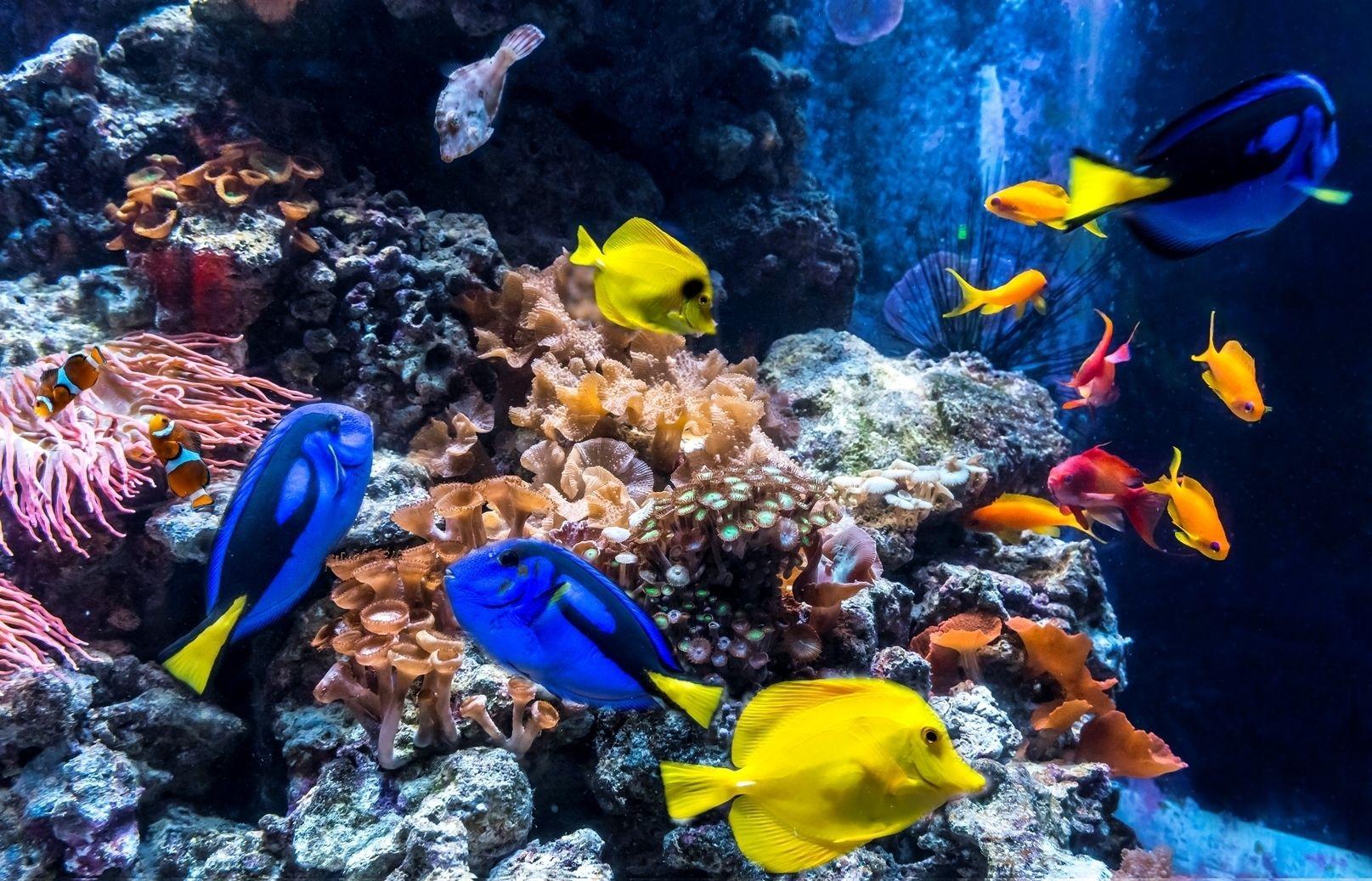 Skippa kön: AquaDom & SEA LIFE Berlin