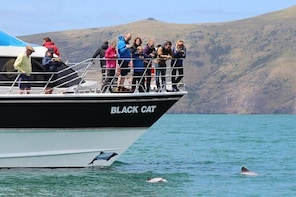 Akaroa Shore Excursion: Akaroa Harbour Nature Cruise