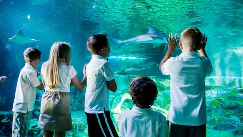 Children looking at fish at an aquarium in Hannover