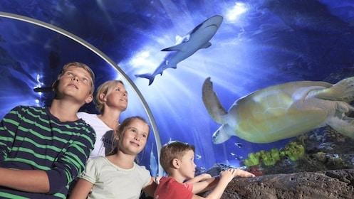 SEA LIFE Munich Aquarium Ticket