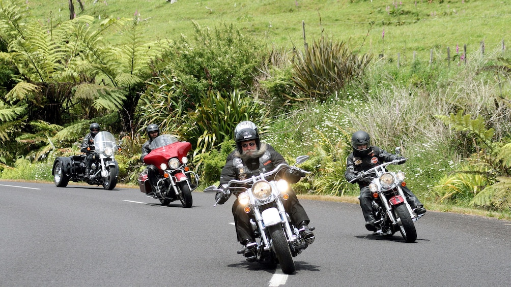 Harley riders on a road in Auckland