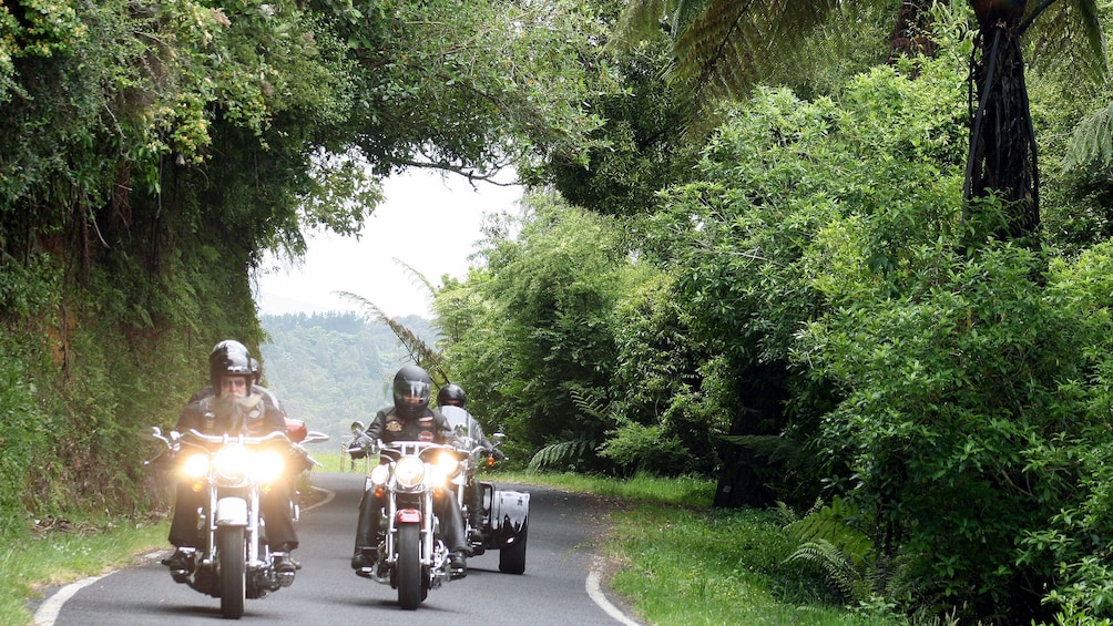 Harley riders on a tree-lined street in Auckland