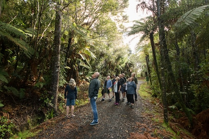 Auckland City Highlights & Wilderness Experience Tour