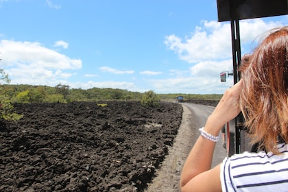 Rangitoto Volcanic Explorer Half-Day Tour