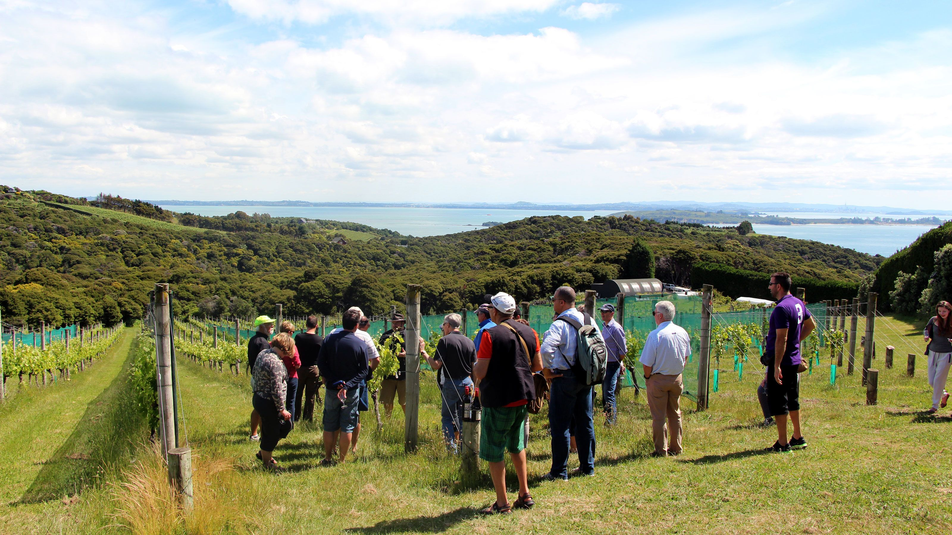 Tour group walking through the vines at a vineyard on Waiheka Island