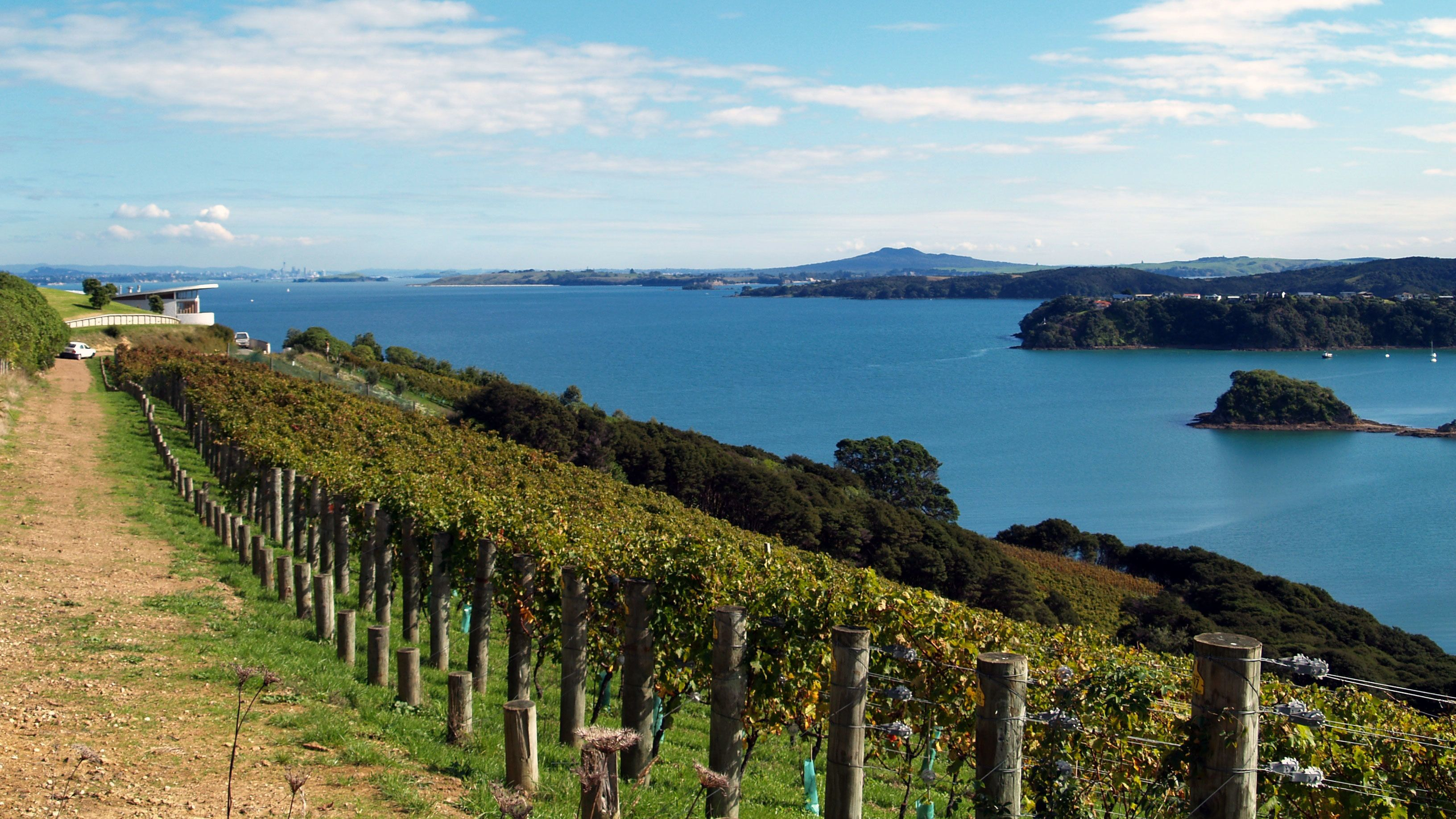 Vineyard along the coast of Waiheka Island
