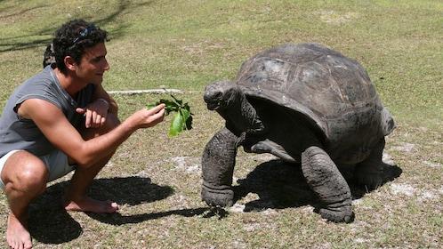 Man feeding a turtle in Seychelles