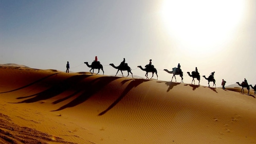 Silhouette of camel riding group in the desert in Agadir