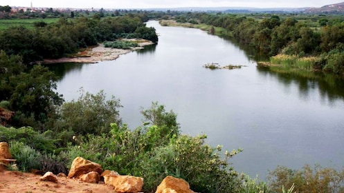 Lush forest along the banks of the Massa River in Massa National Park in Agadir