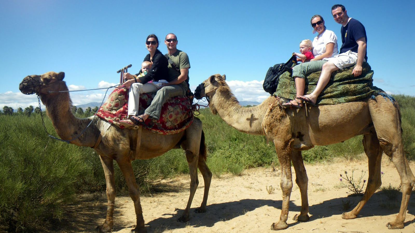 A couple of families riding camels in Agadir