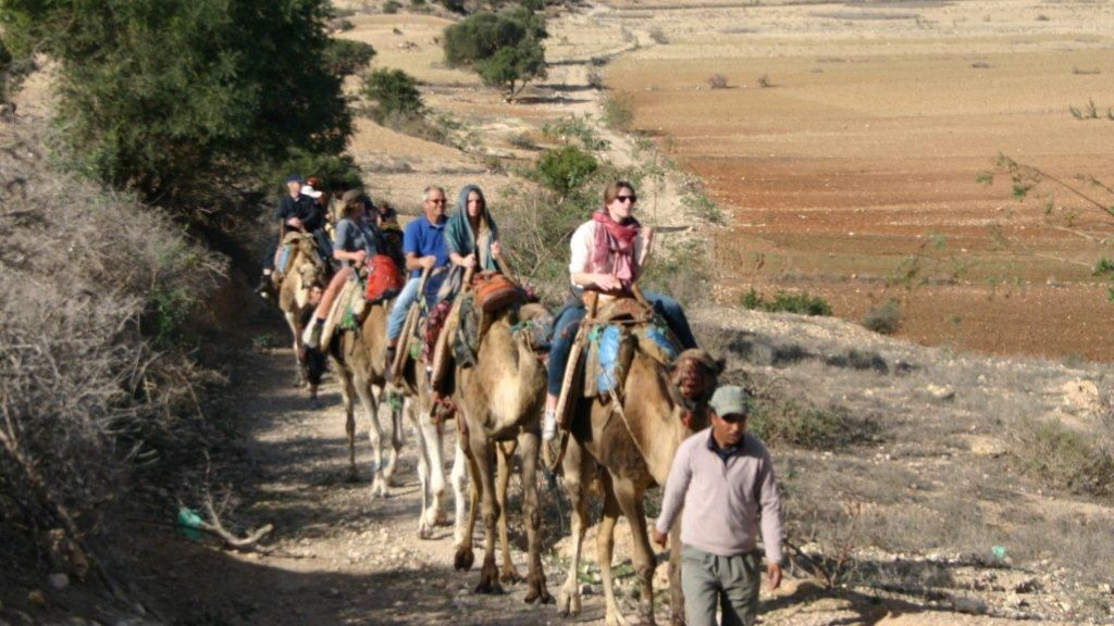Tour group riding camels on a path near the eucalyptus forest in Agadir