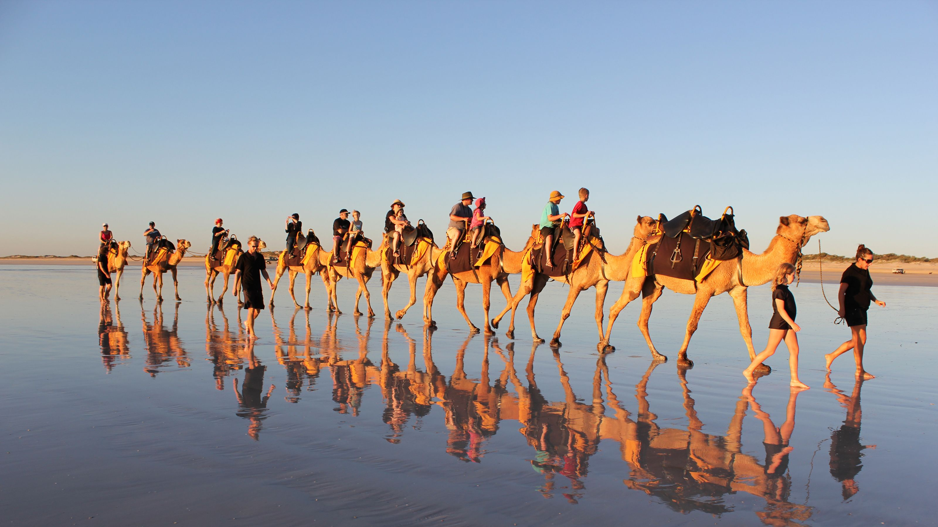 Row of camels with riders in shallow water in Agadir