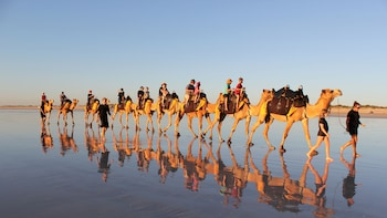 Dromedary trek by Sand Dunes & Eucalyptus Forest