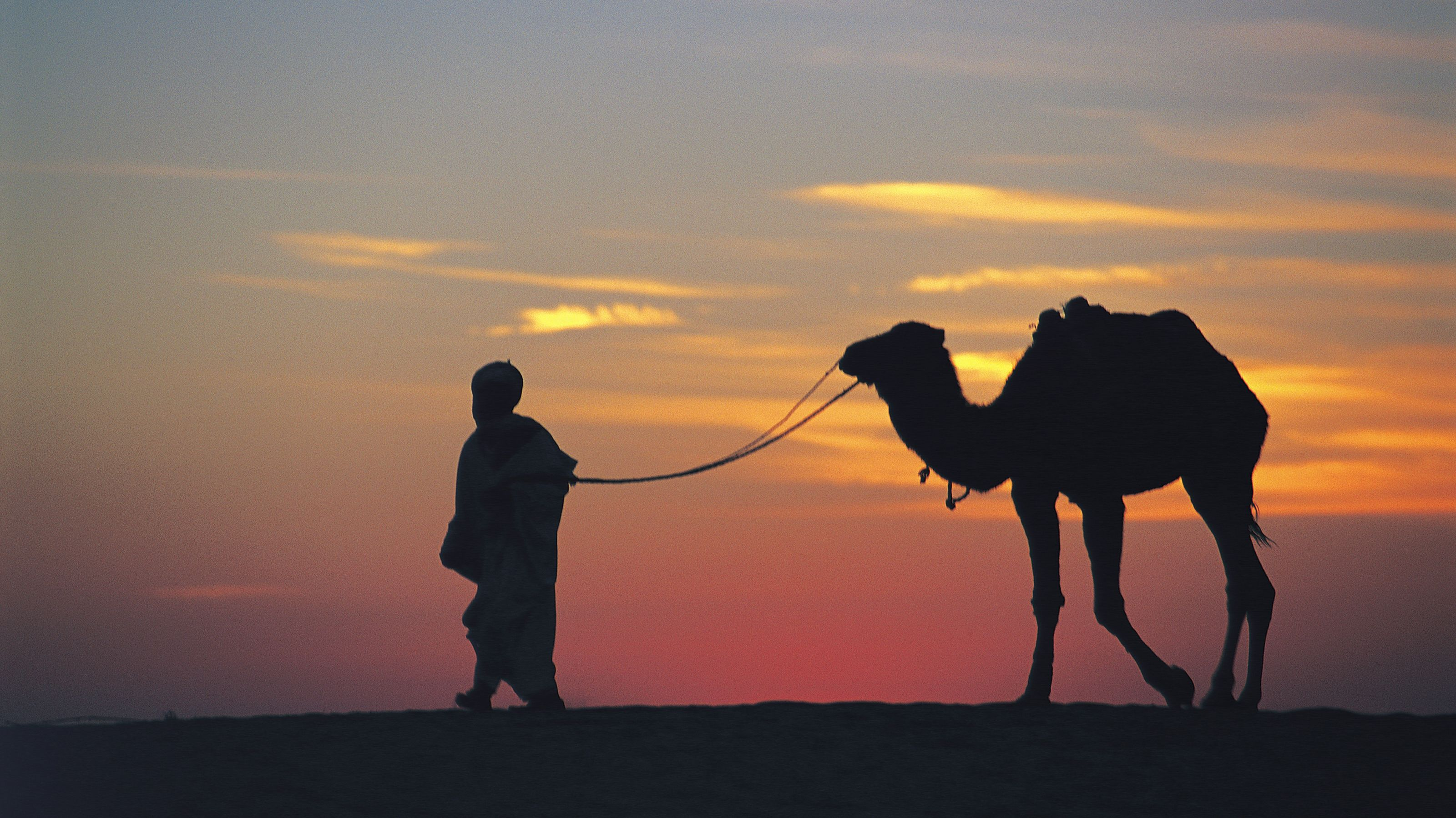 Silhouette of man leading a camel by the reins in Agadir