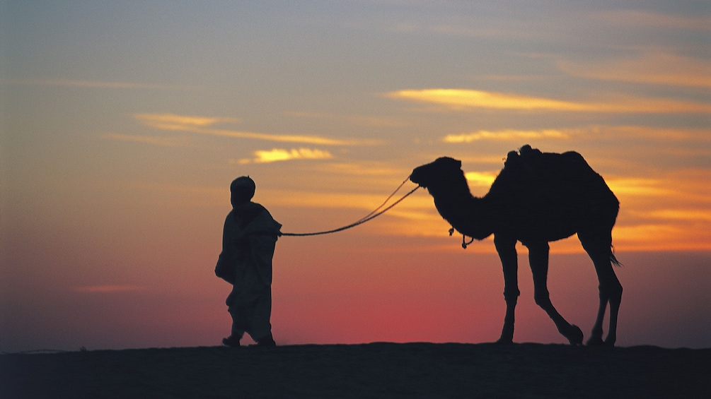 Show item 3 of 5. Silhouette of man leading a camel by the reins in Agadir