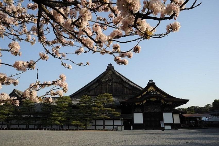 Show item 5 of 8. Kyoto & Nara 1-Day Tour