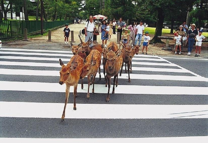 Show item 2 of 8. Kyoto & Nara 1-Day Tour