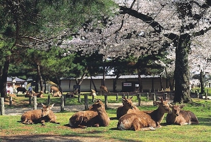Activity Nara Afternoon Guided Tour