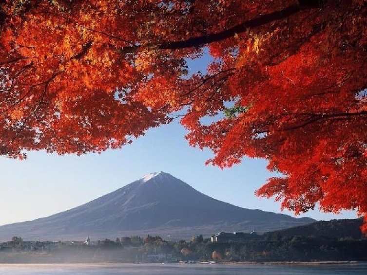 Show item 4 of 9. Mount Fuji & Hakone National Park Full-Day Bus Tour