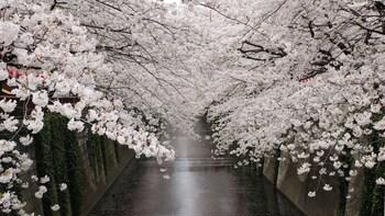 Tokion aamukierros