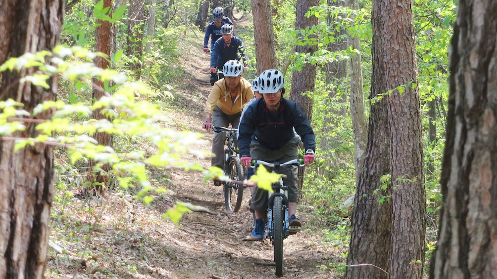 bicyclists in forest in Tokyo