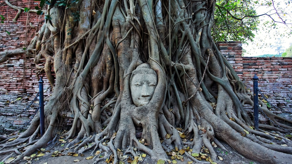 Foto 4 van 11. a statue of a buddha encased by tree roots in bangkok