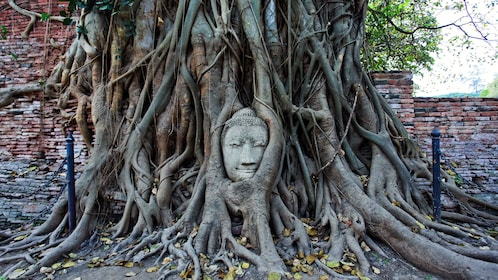 a statue of a buddha encased by tree roots in bangkok