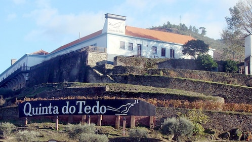 at the winery Quinta do Tedo in Portugal