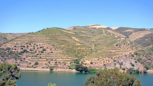 vineyard covered hill at Douro Valley in Portugal