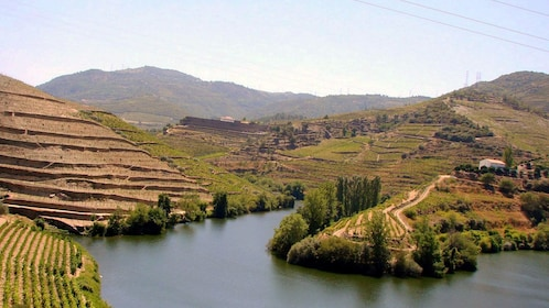 vineyard covered landscape at Douro Valley in Portugal