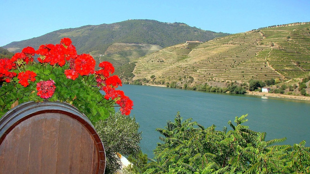 Show item 1 of 5. decorated wine barrel at Douro Valley in Portugal