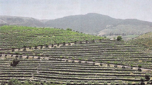 field covered in farmlands in Douro Valley