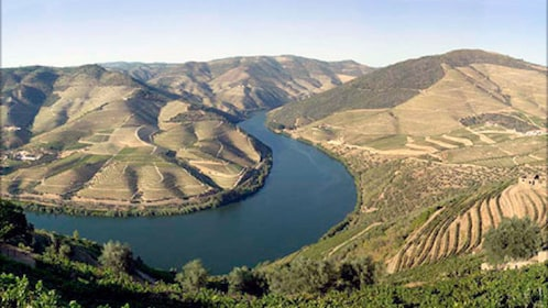 landscape covered in vineyards in Douro Valley