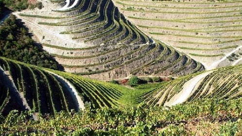 stepped hills for agricultural farming in Douro Valley