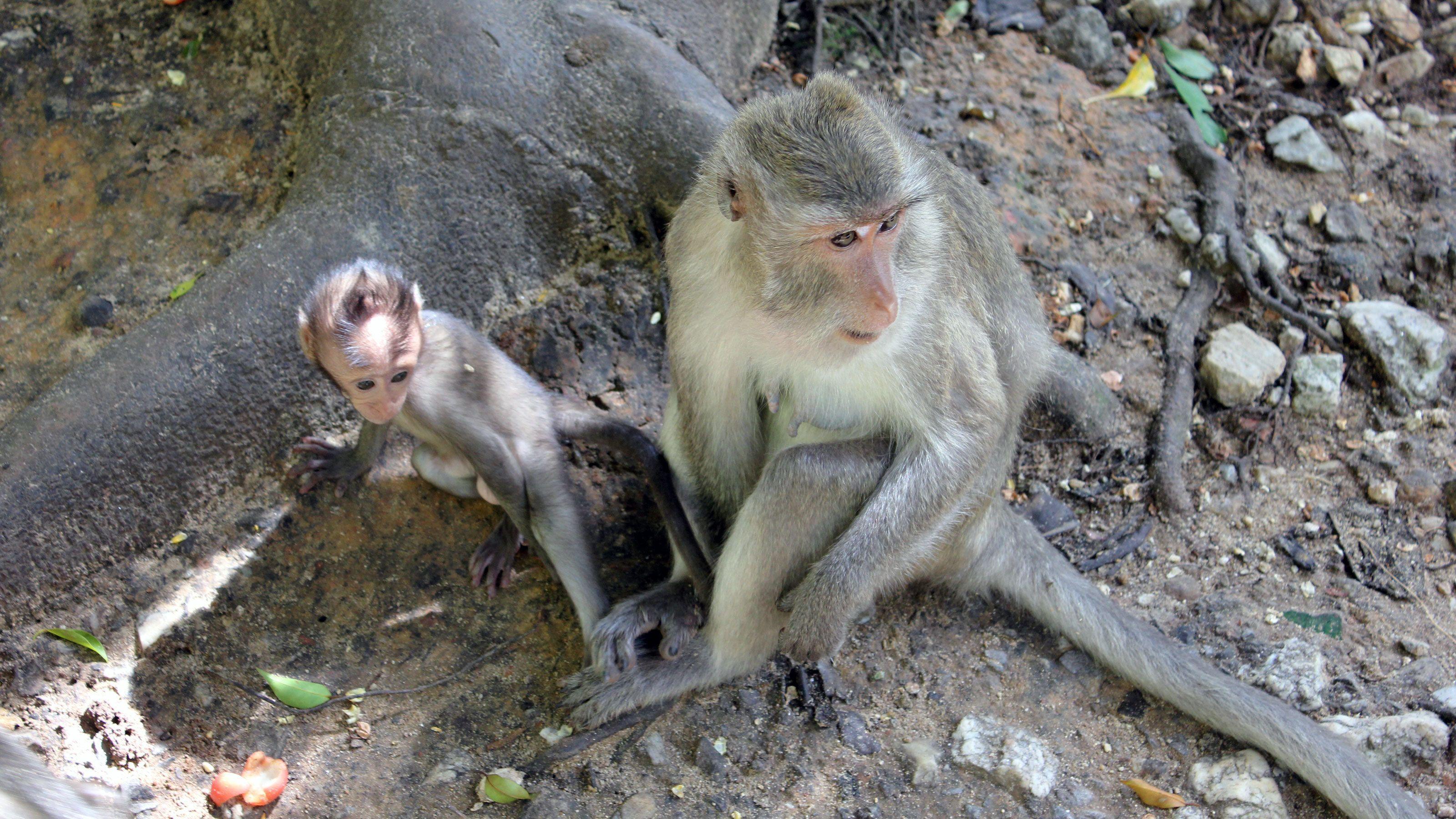 wild monkeys resting near trees in Gibraltar