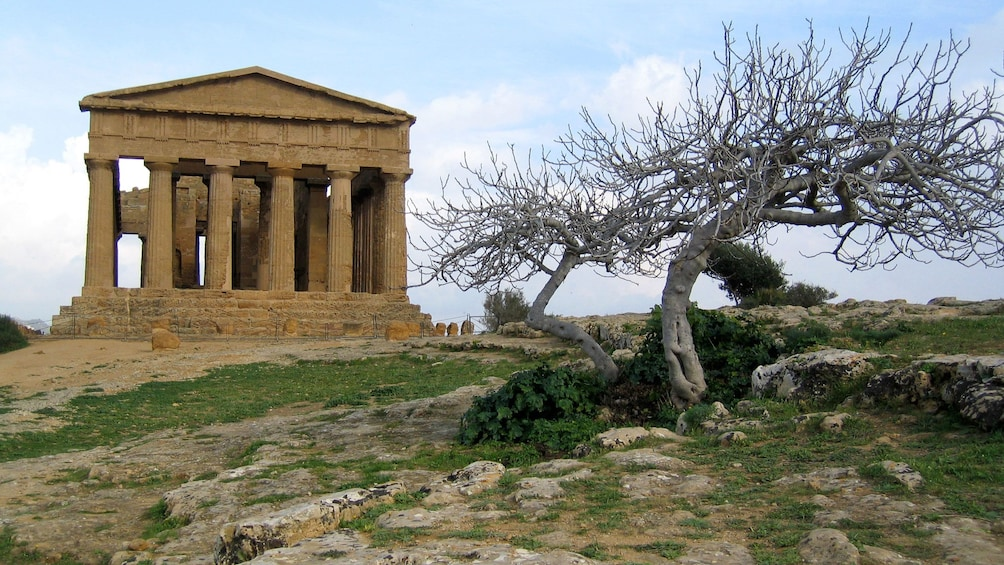 withering trees near the Temple of Concordia in Sicily