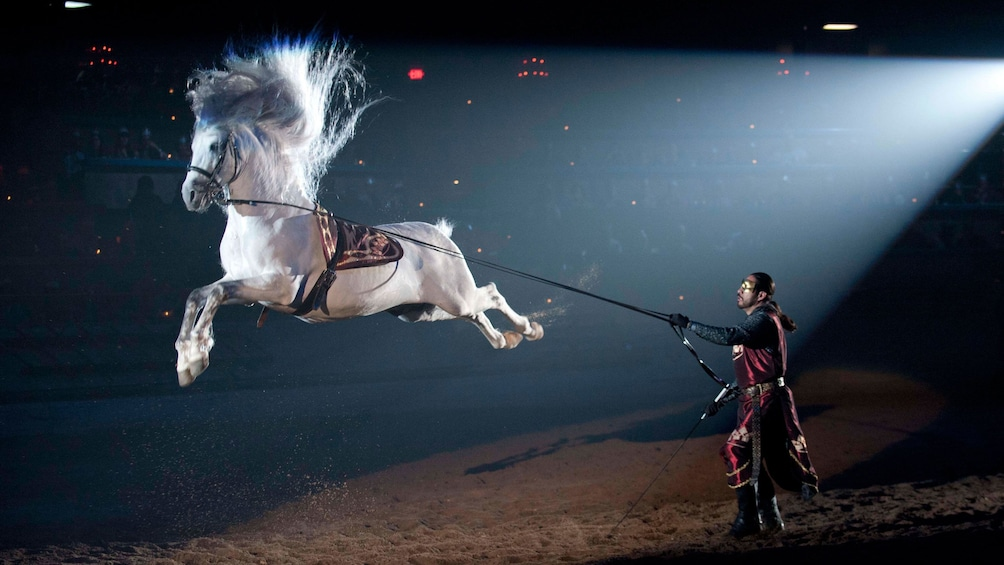 Foto 1 von 9 laden White horse performing a jump trick at Medieval Times in Chicago
